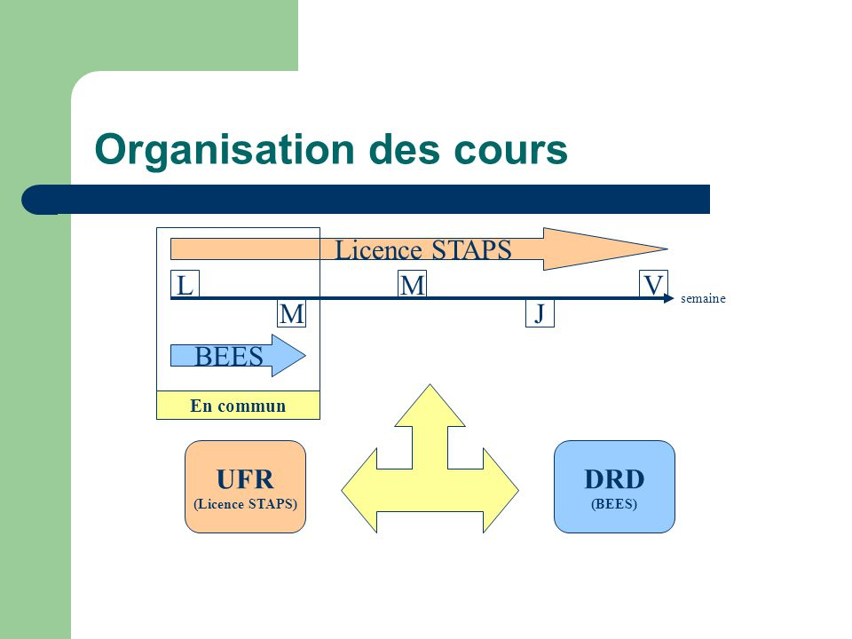 Organisation des cours
