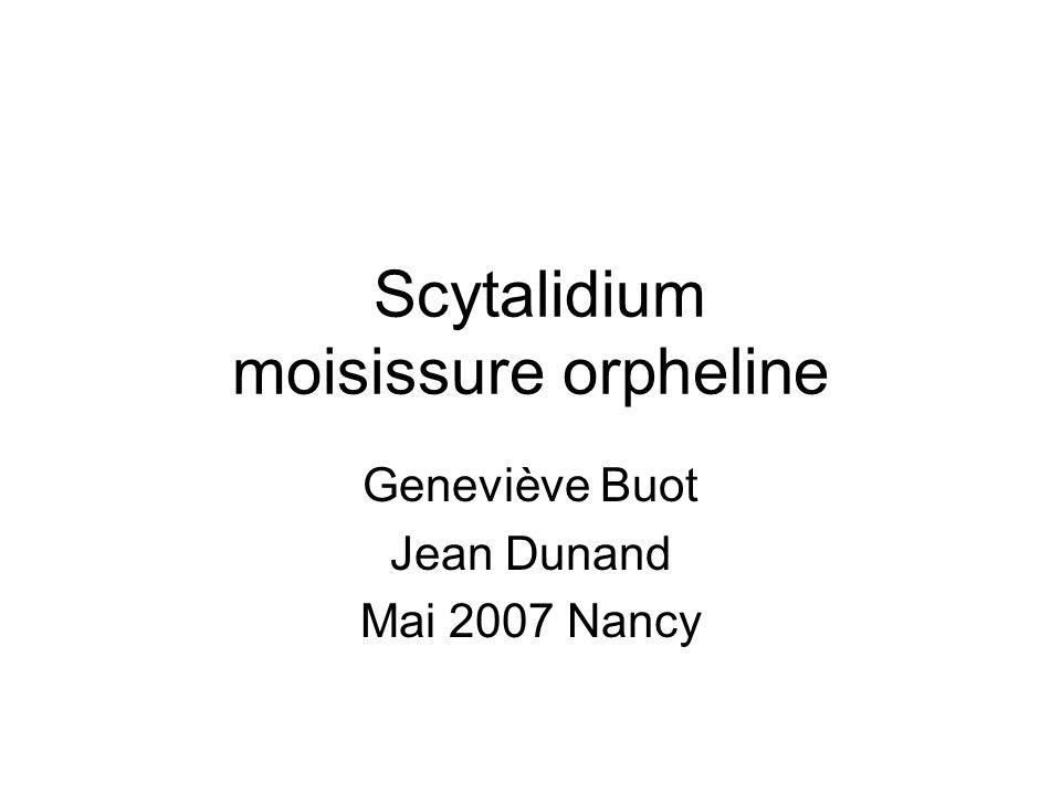Scytalidium moisissure orpheline