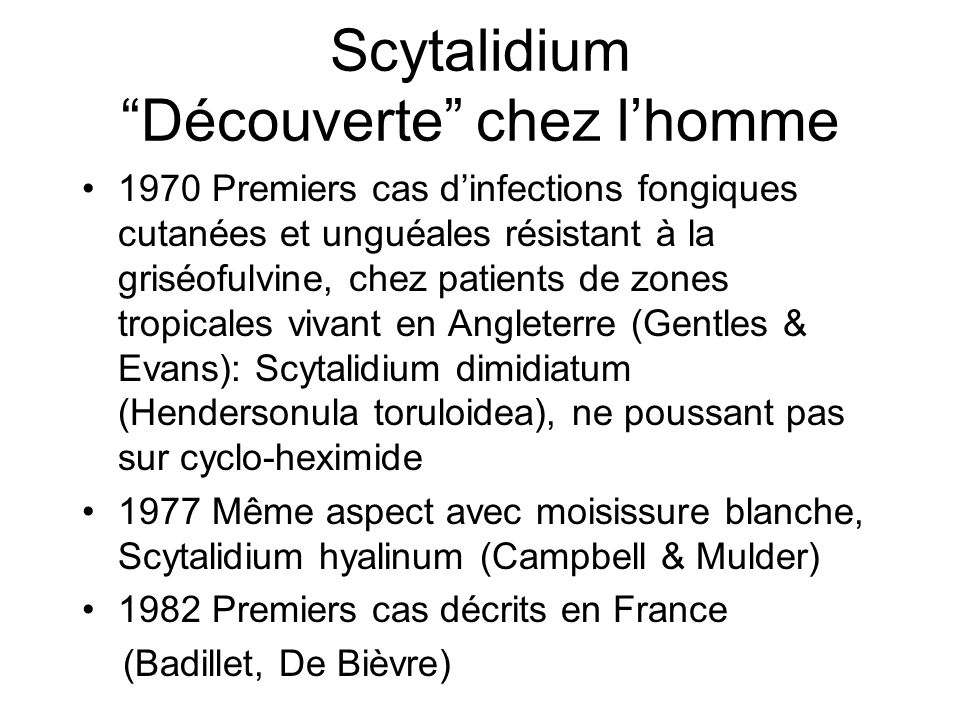 Scytalidium Découverte chez l'homme