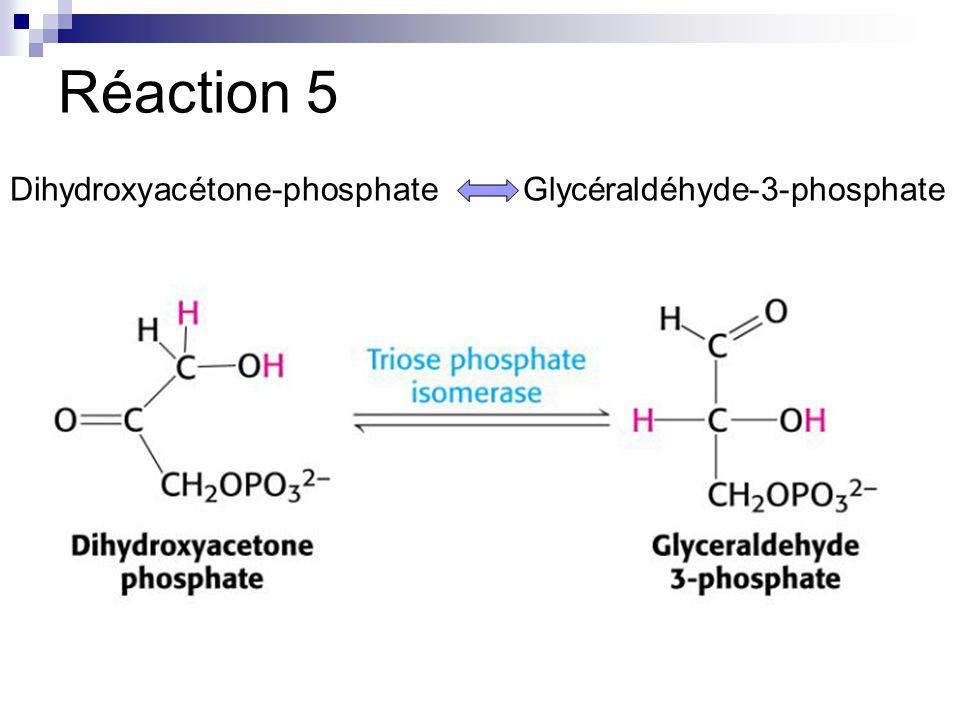 Réaction 5 Dihydroxyacétone-phosphate Glycéraldéhyde-3-phosphate