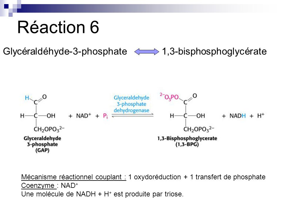 Réaction 6 Glycéraldéhyde-3-phosphate 1,3-bisphosphoglycérate