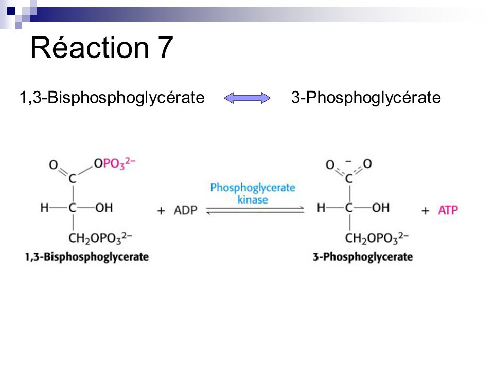 Réaction 7 1,3-Bisphosphoglycérate 3-Phosphoglycérate