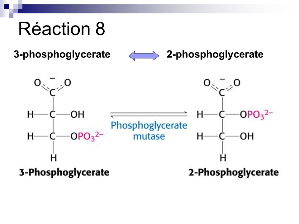 Réaction 8 3-phosphoglycerate 2-phosphoglycerate