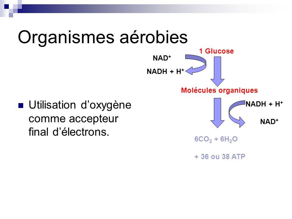 Organismes aérobies 1 Glucose. NAD+ NADH + H+ Utilisation d'oxygène comme accepteur final d'électrons.