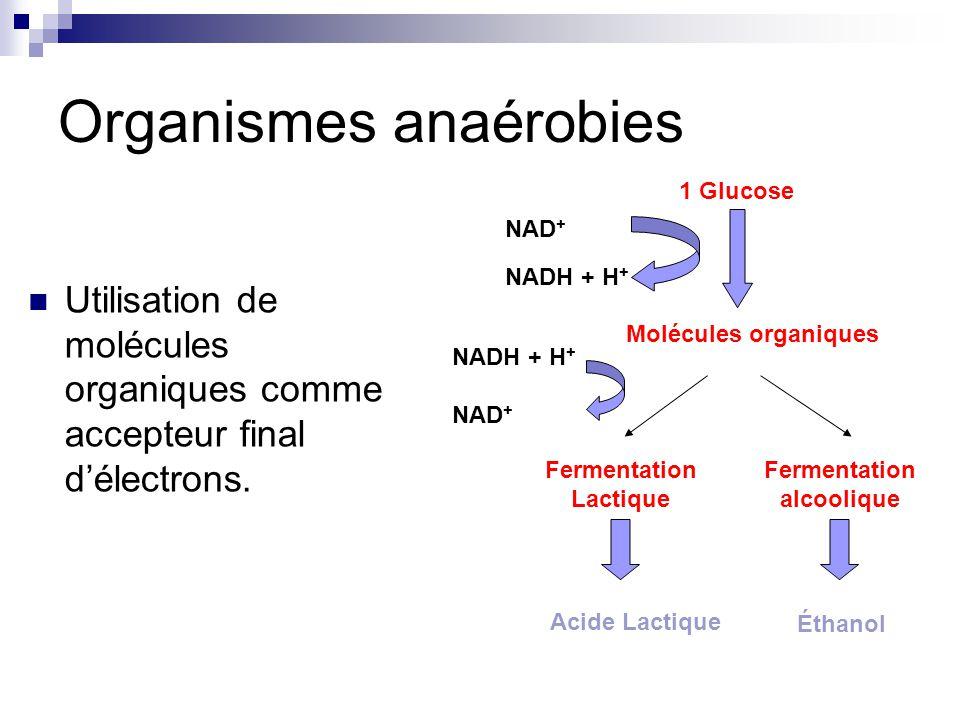 Organismes anaérobies