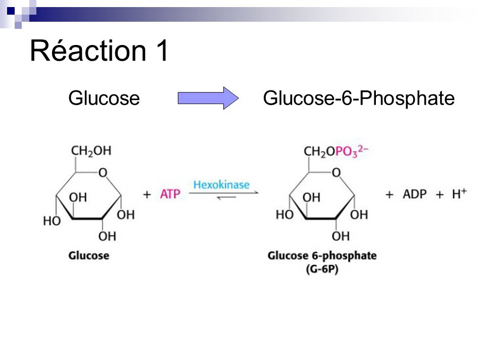 Réaction 1 Glucose Glucose-6-Phosphate