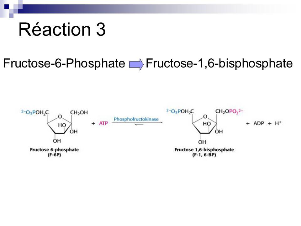 Réaction 3 Fructose-6-Phosphate Fructose-1,6-bisphosphate