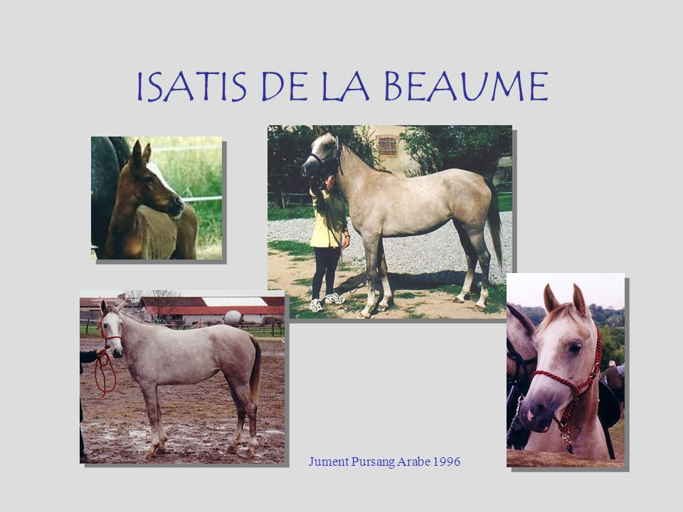 ISATIS DE LA BEAUME Jument Pursang Arabe 1996