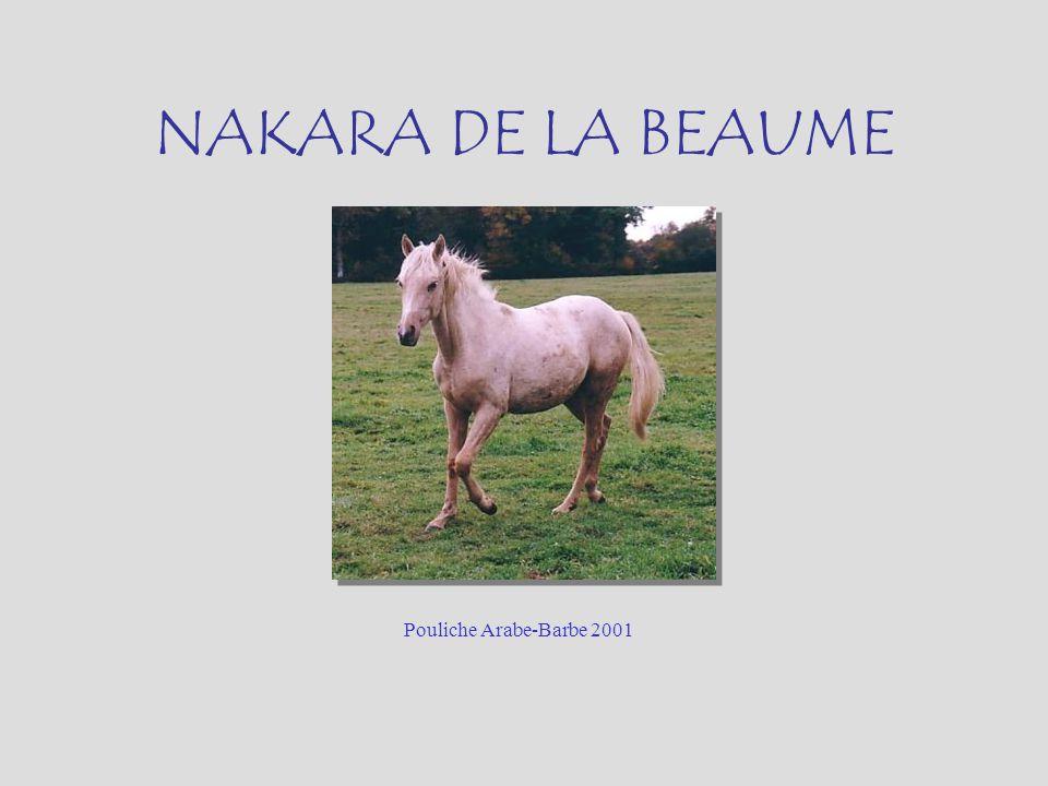 NAKARA DE LA BEAUME Pouliche Arabe-Barbe 2001