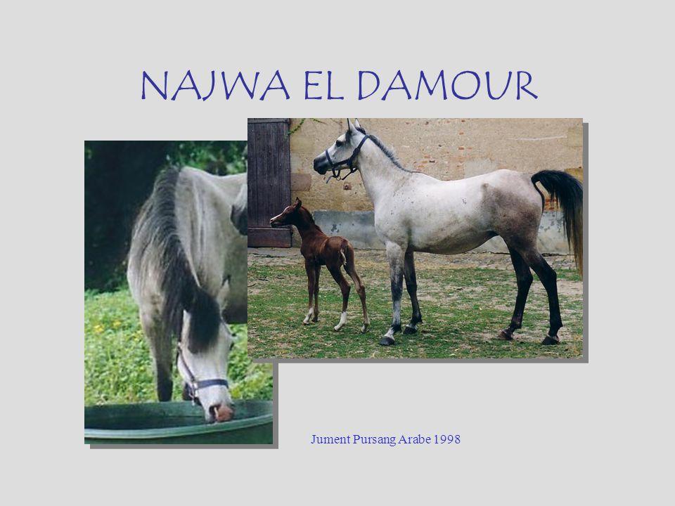 NAJWA EL DAMOUR Jument Pursang Arabe 1998
