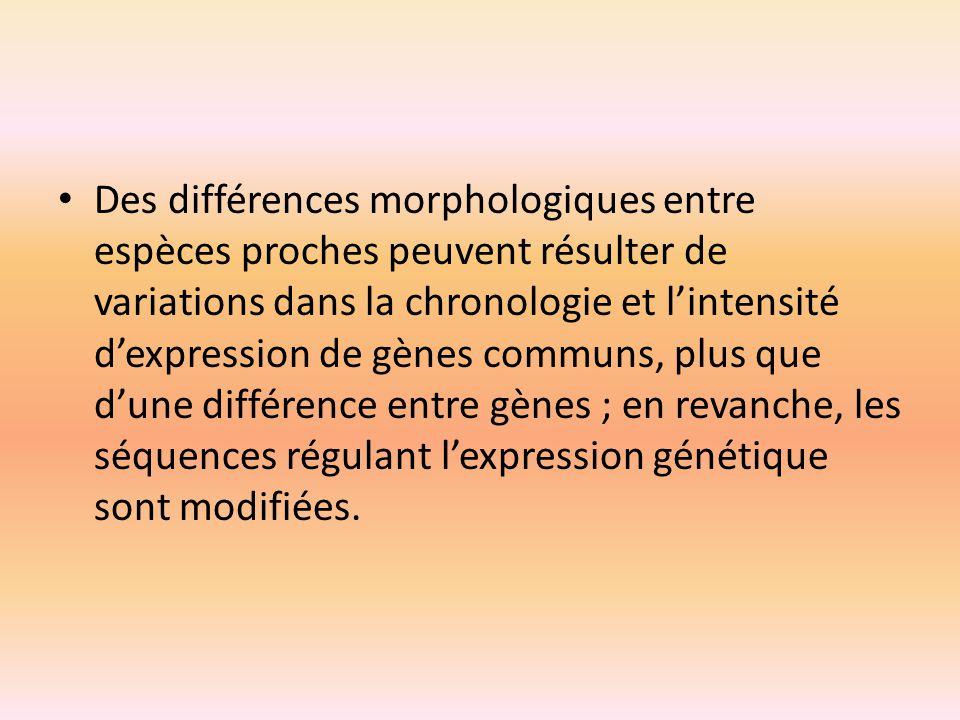 Des différences morphologiques entre espèces proches peuvent résulter de variations dans la chronologie et l'intensité d'expression de gènes communs, plus que d'une différence entre gènes ; en revanche, les séquences régulant l'expression génétique sont modifiées.