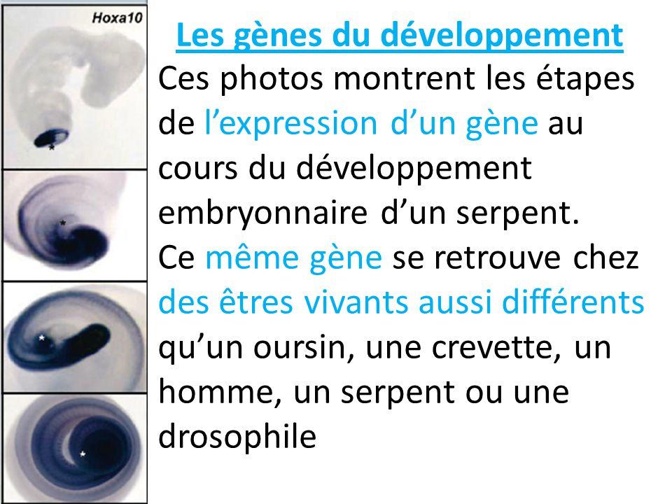 Les gènes du développement