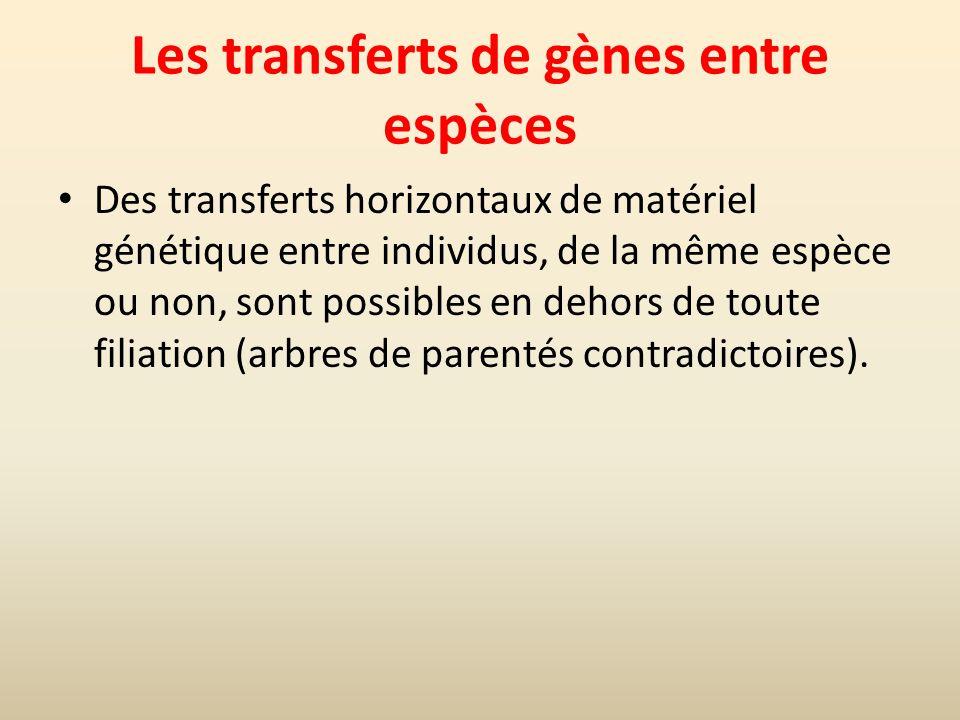 Les transferts de gènes entre espèces