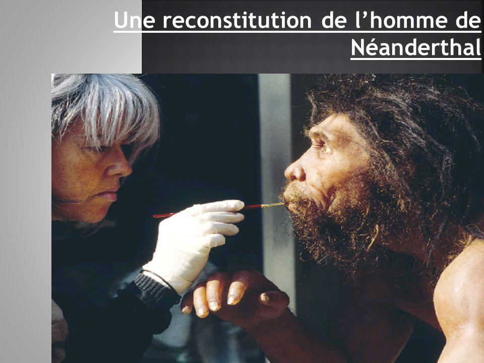 Une reconstitution de l'homme de Néanderthal