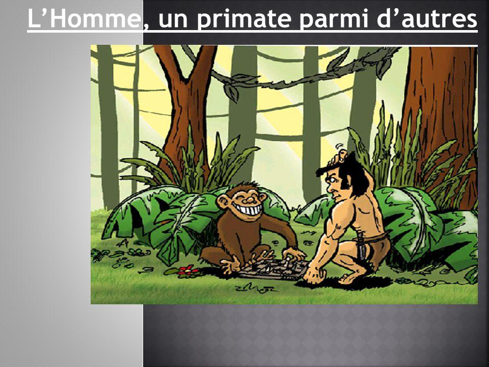 L'Homme, un primate parmi d'autres
