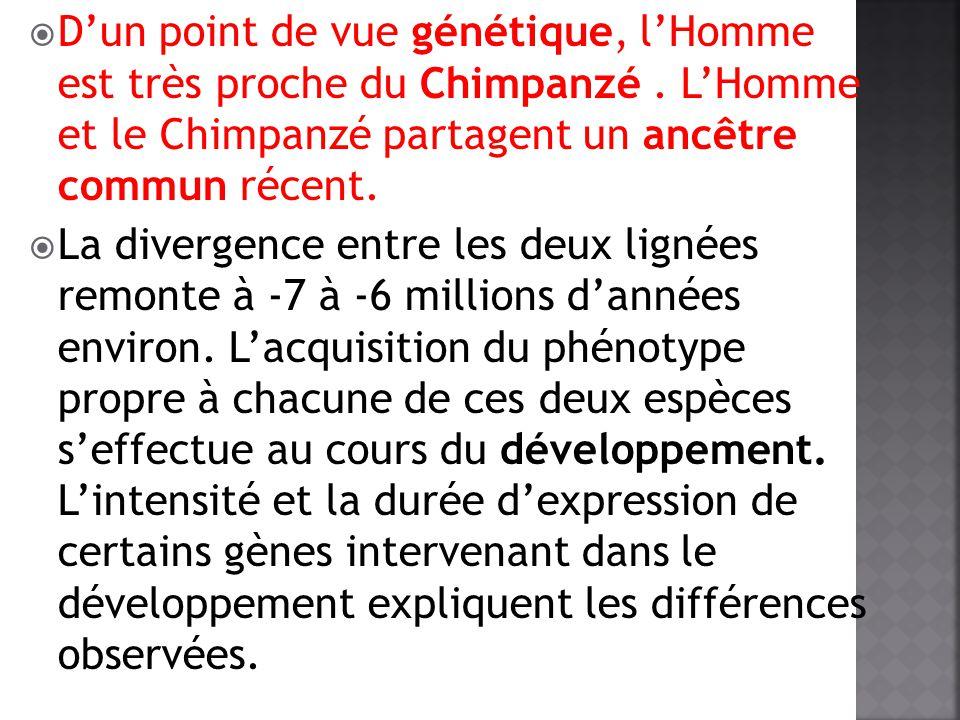 D'un point de vue génétique, l'Homme est très proche du Chimpanzé