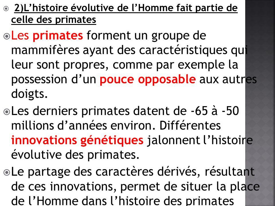 2)L'histoire évolutive de l'Homme fait partie de celle des primates