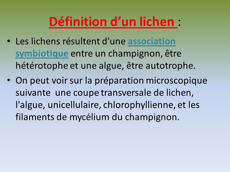 Définition d'un lichen :