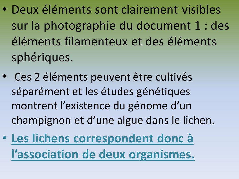 Deux éléments sont clairement visibles sur la photographie du document 1 : des éléments filamenteux et des éléments sphériques.
