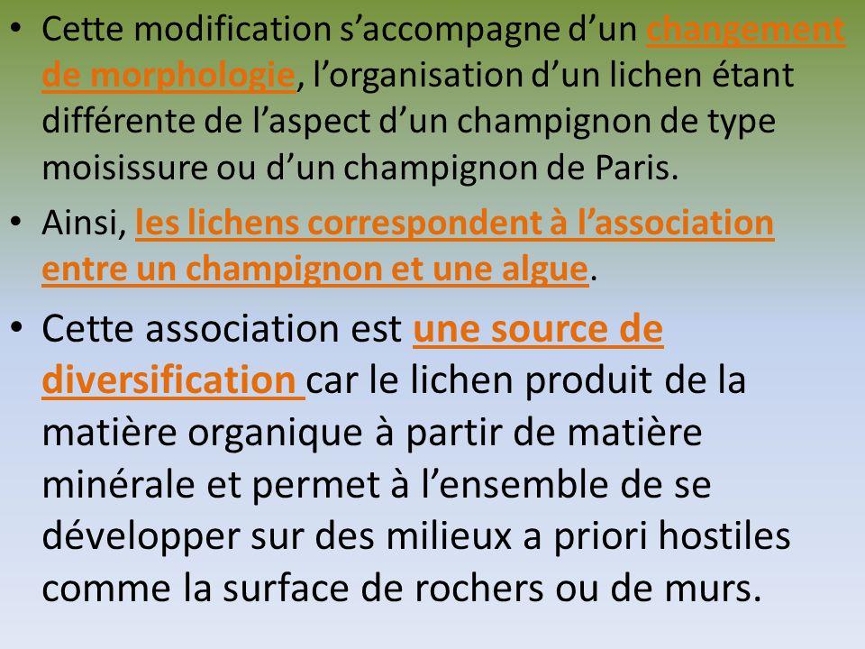 Cette modification s'accompagne d'un changement de morphologie, l'organisation d'un lichen étant différente de l'aspect d'un champignon de type moisissure ou d'un champignon de Paris.