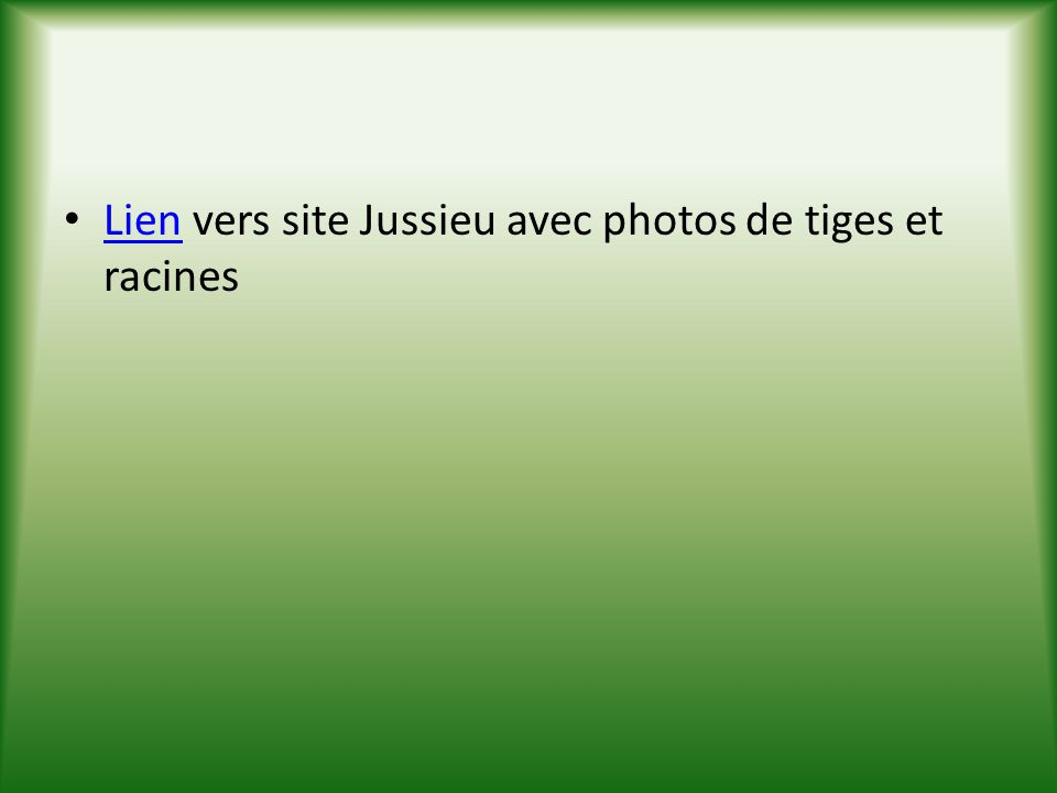 Lien vers site Jussieu avec photos de tiges et racines
