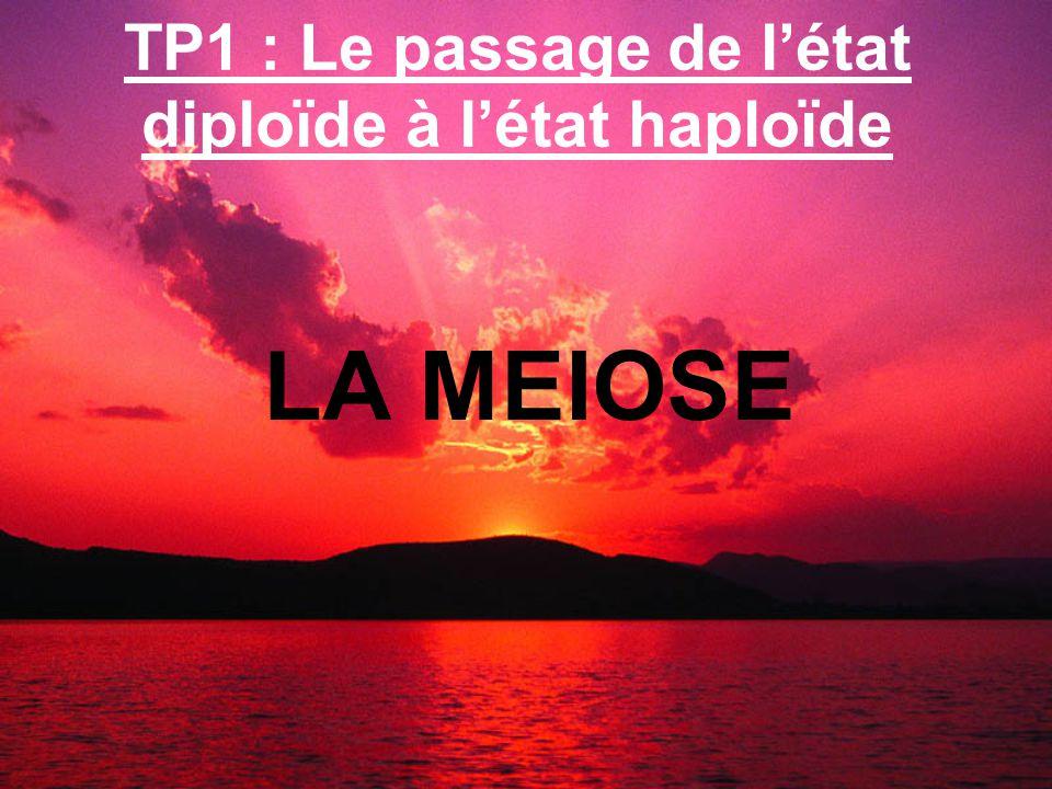 TP1 : Le passage de l'état diploïde à l'état haploïde