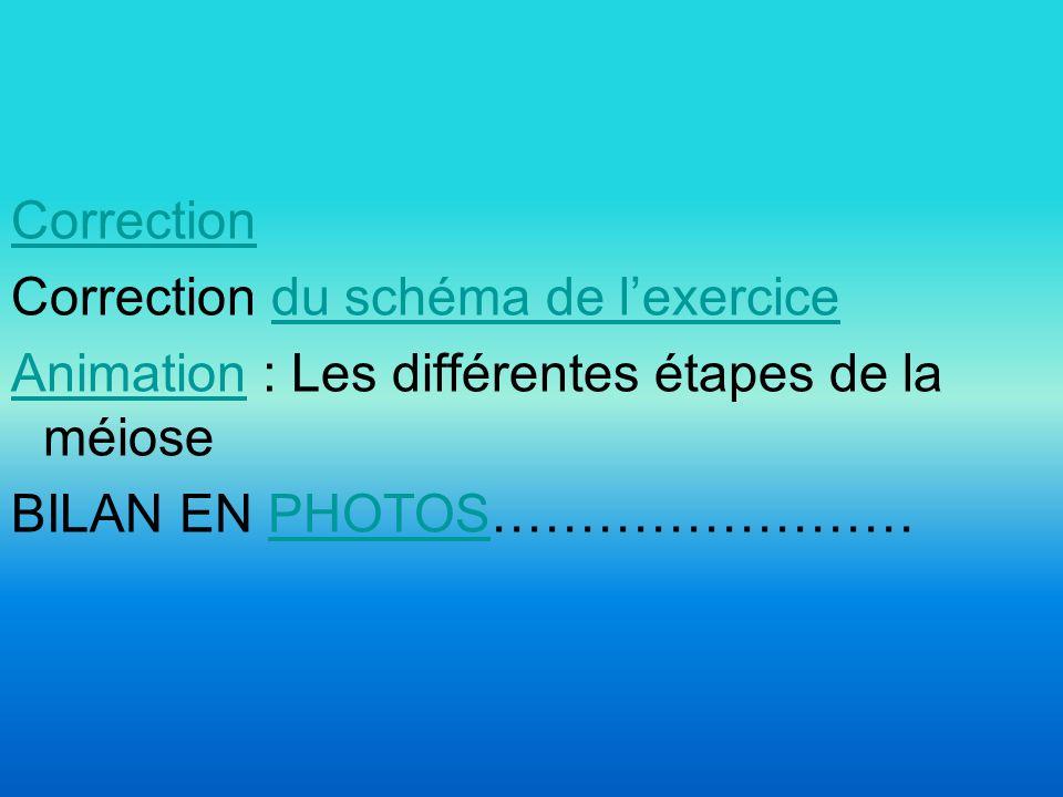 Correction Correction du schéma de l'exercice Animation : Les différentes étapes de la méiose BILAN EN PHOTOS……………………
