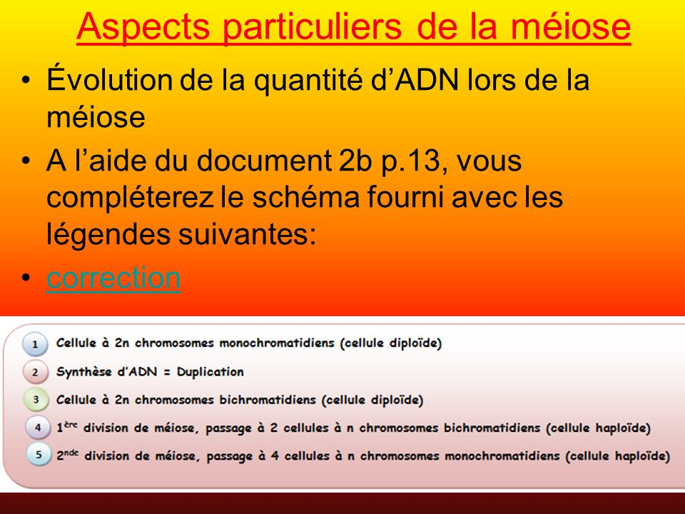 Aspects particuliers de la méiose