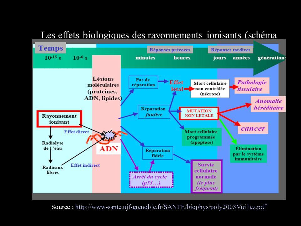 Les effets biologiques des rayonnements ionisants (schéma récapitulatif)