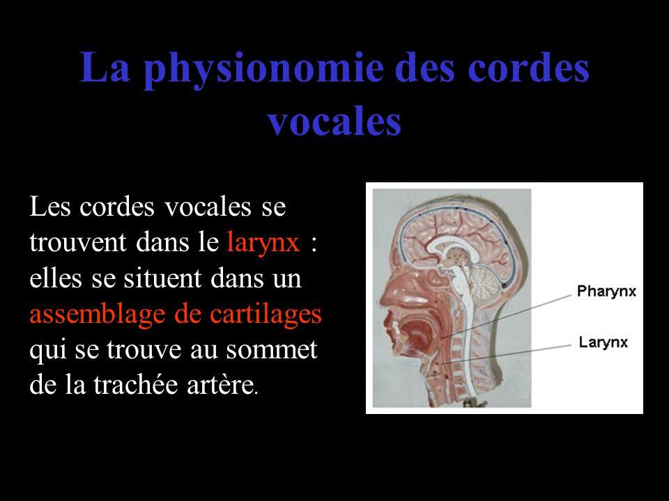 La physionomie des cordes vocales