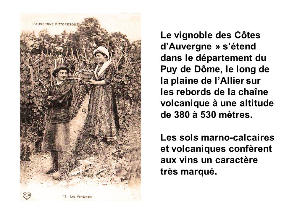 Le vignoble des Côtes d'Auvergne » s'étend dans le département du Puy de Dôme, le long de la plaine de l'Allier sur les rebords de la chaîne volcanique à une altitude de 380 à 530 mètres.