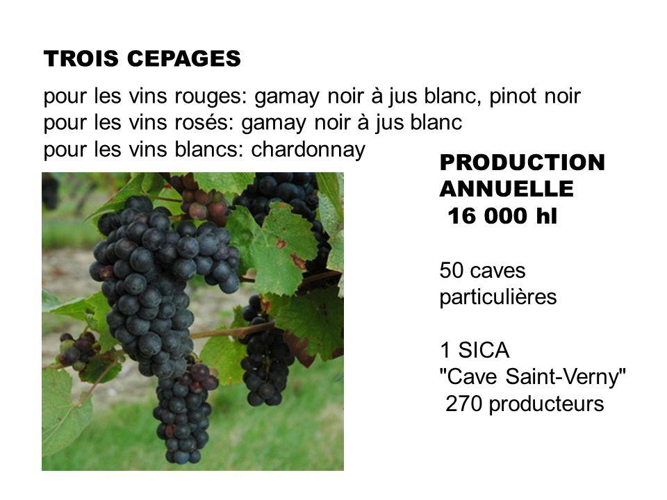 TROIS CEPAGES pour les vins rouges: gamay noir à jus blanc, pinot noir. pour les vins rosés: gamay noir à jus blanc.