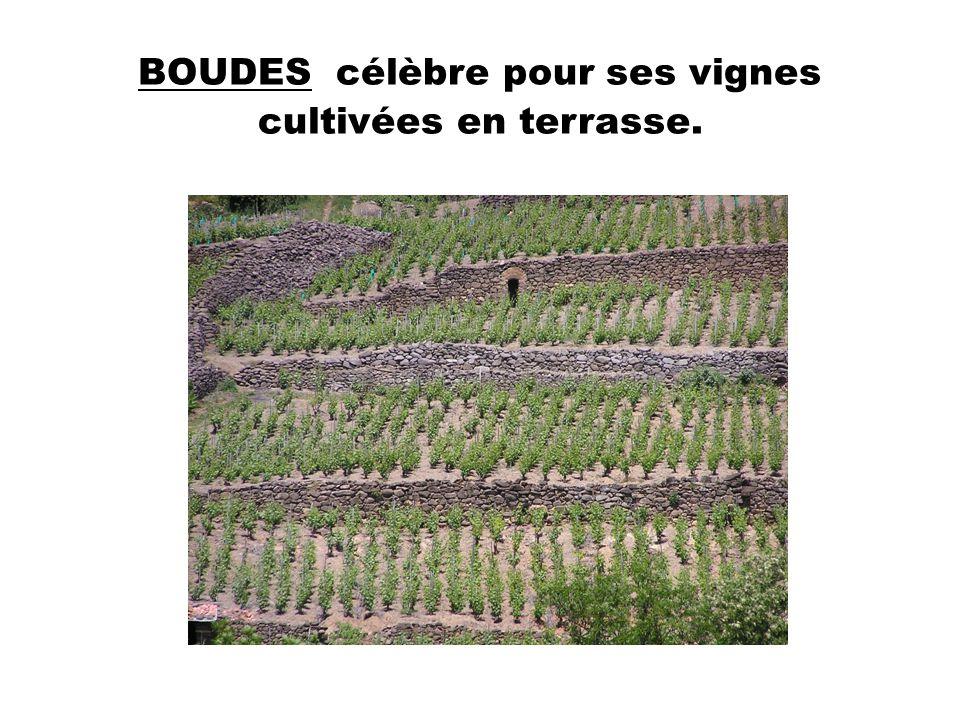 BOUDES célèbre pour ses vignes cultivées en terrasse.