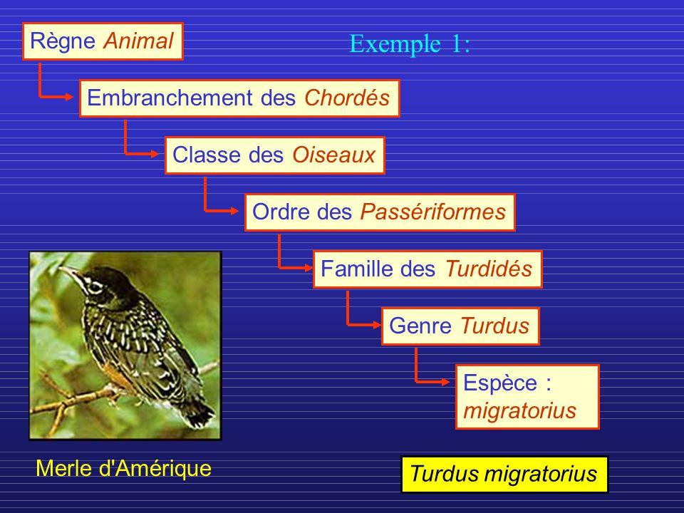 Exemple 1: Règne Animal Embranchement des Chordés Classe des Oiseaux