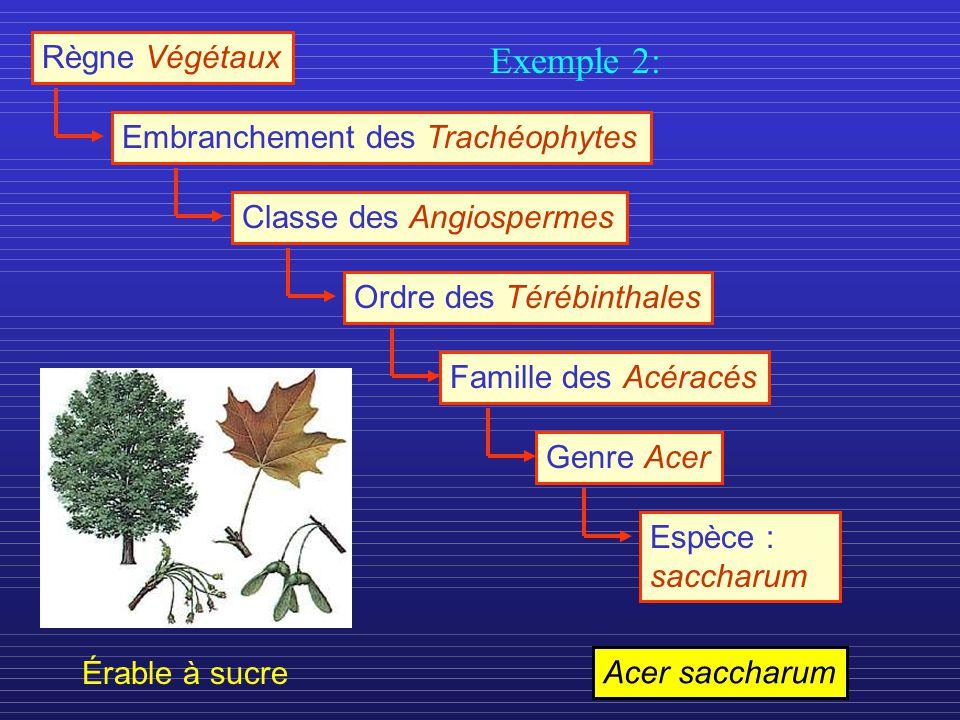 Exemple 2: Règne Végétaux Embranchement des Trachéophytes