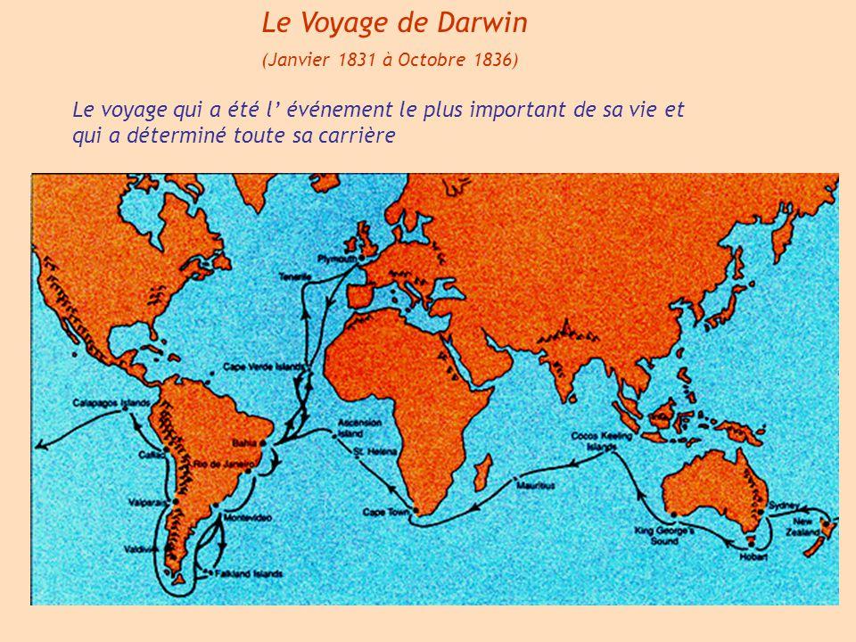 Le Voyage de Darwin (Janvier 1831 à Octobre 1836) Le voyage qui a été l' événement le plus important de sa vie et qui a déterminé toute sa carrière.