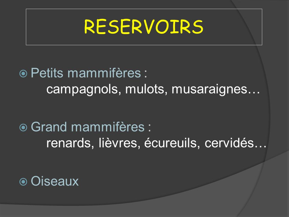RESERVOIRS Petits mammifères : campagnols, mulots, musaraignes…