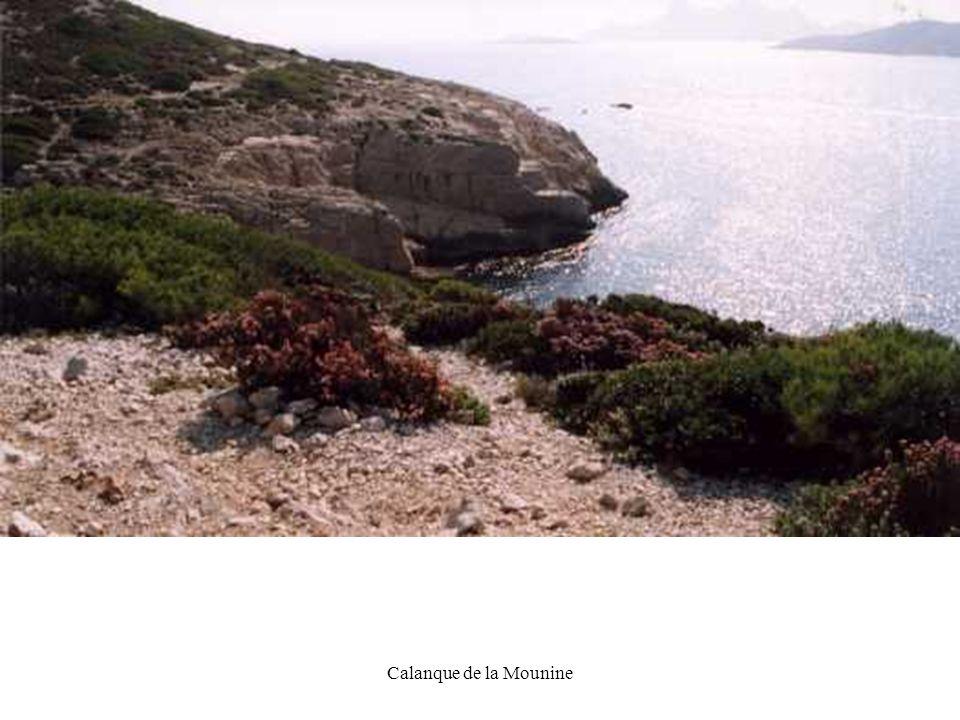 DG19 Calanque de la Mounine
