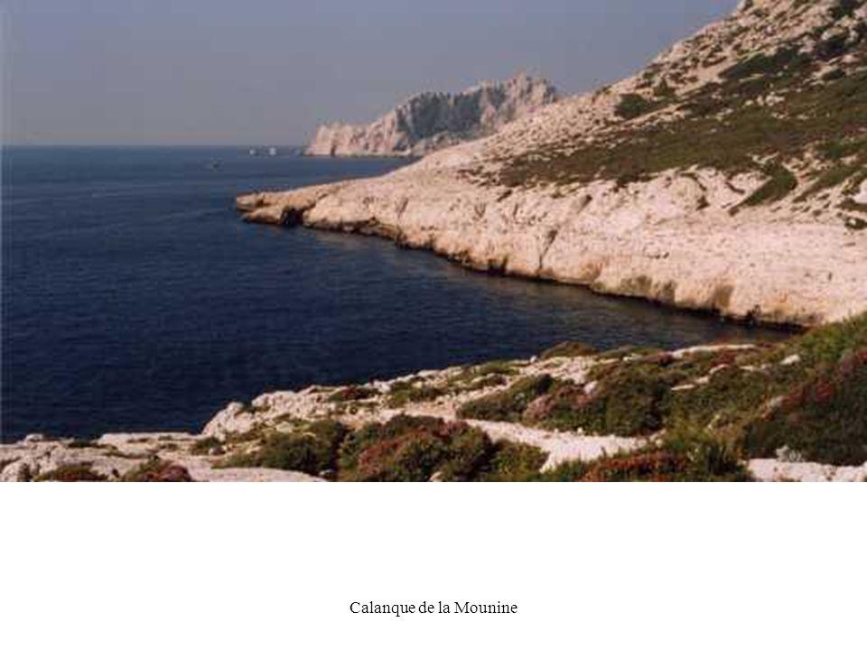 DG22 Calanque de la Mounine