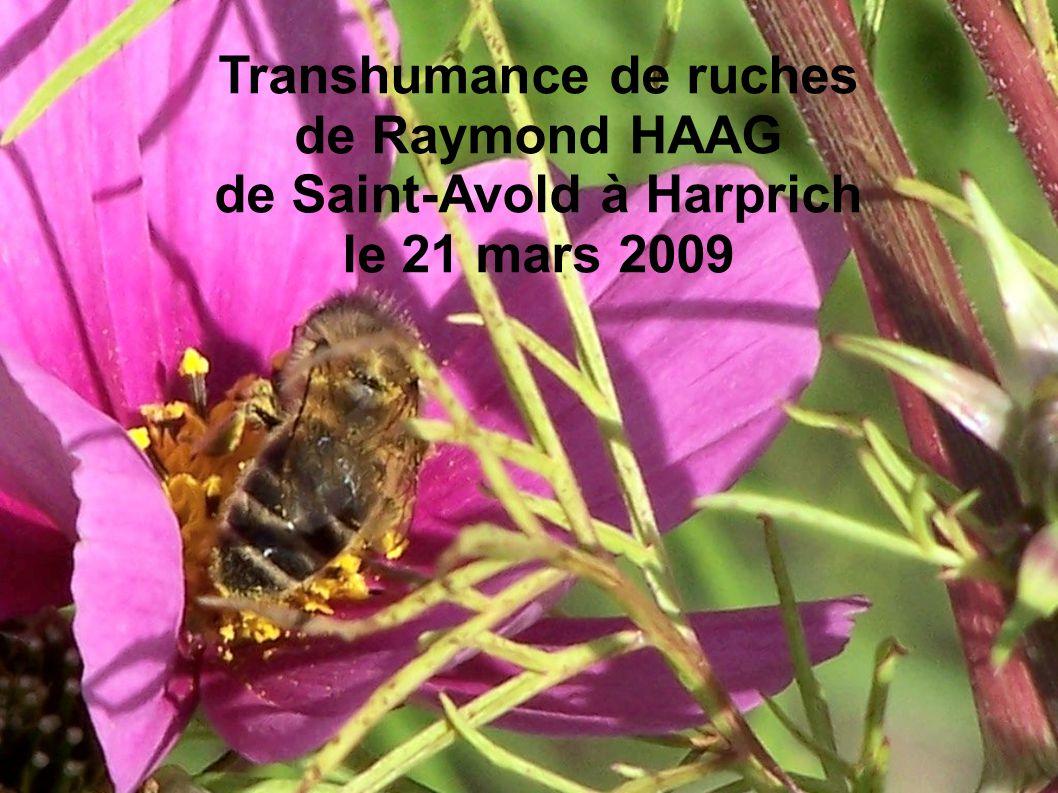 Transhumance de ruches de Saint-Avold à Harprich