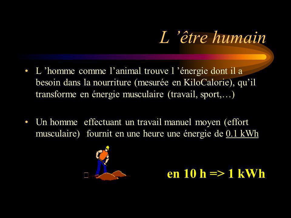 L 'être humain