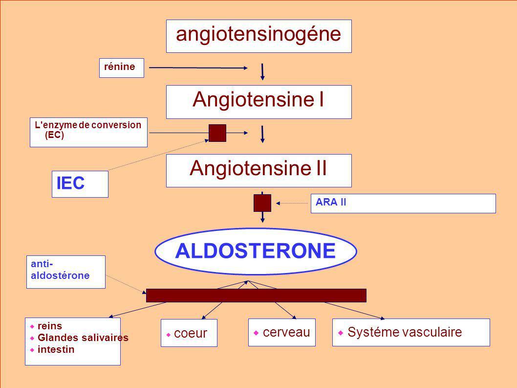 angiotensinogéne Angiotensine I Angiotensine II ALDOSTERONE IEC