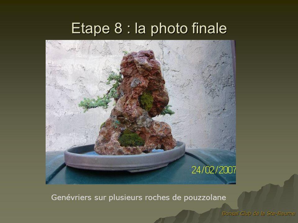 Etape 8 : la photo finale Genévriers sur plusieurs roches de pouzzolane Bonsaï Club de la Ste-Baume
