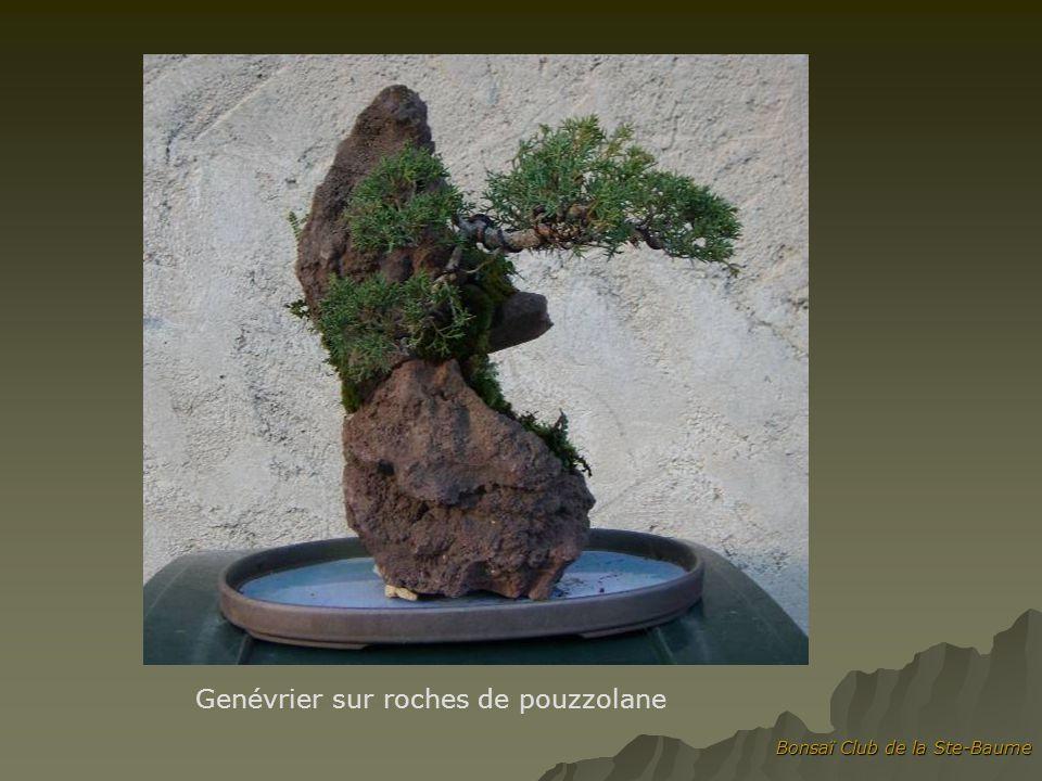 Genévrier sur roches de pouzzolane