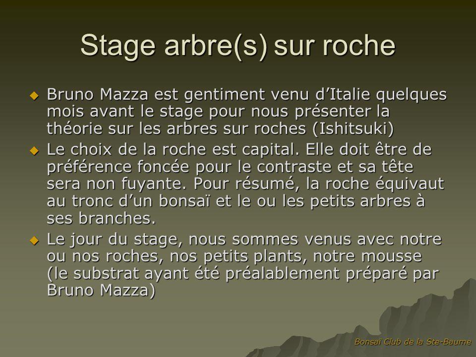 Stage arbre(s) sur roche