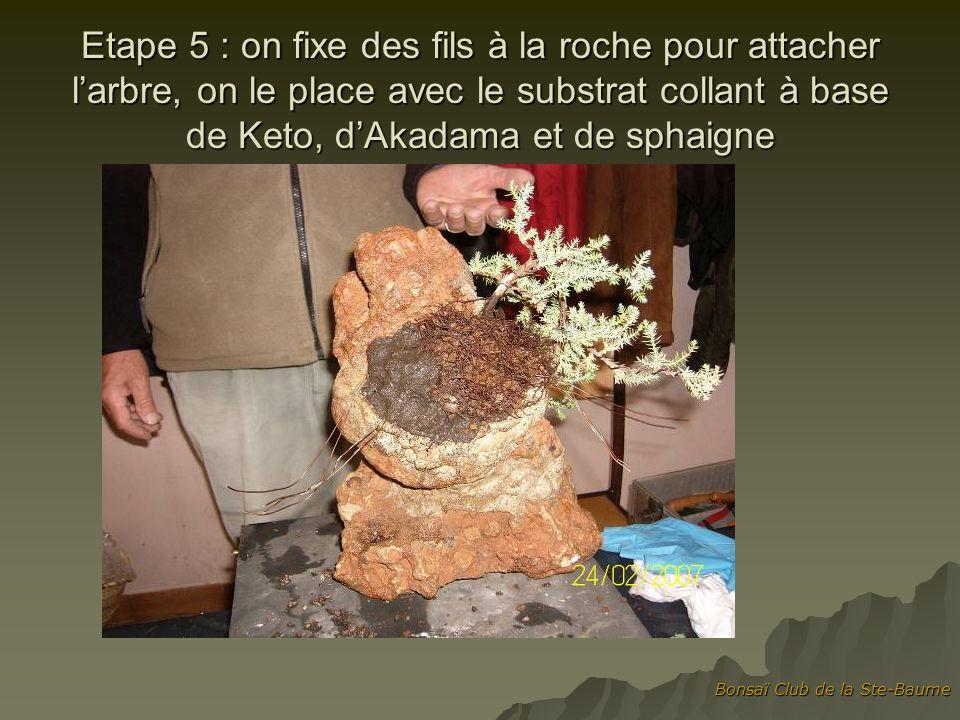 Etape 5 : on fixe des fils à la roche pour attacher l'arbre, on le place avec le substrat collant à base de Keto, d'Akadama et de sphaigne