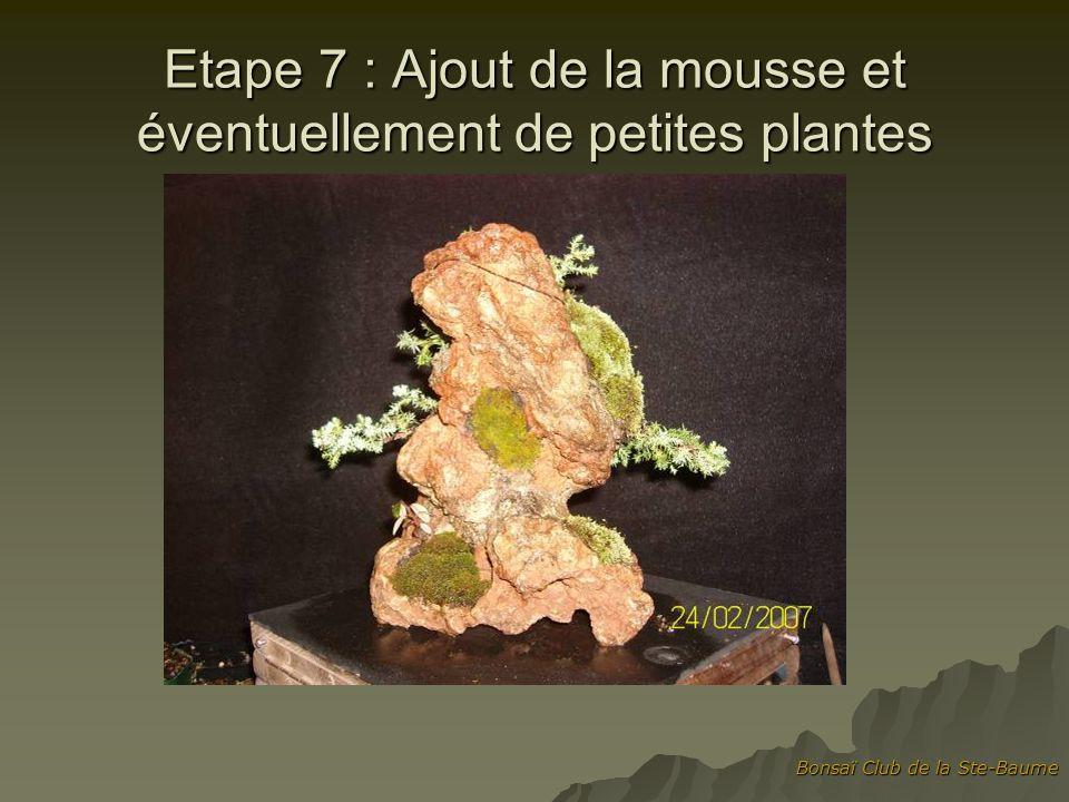 Etape 7 : Ajout de la mousse et éventuellement de petites plantes