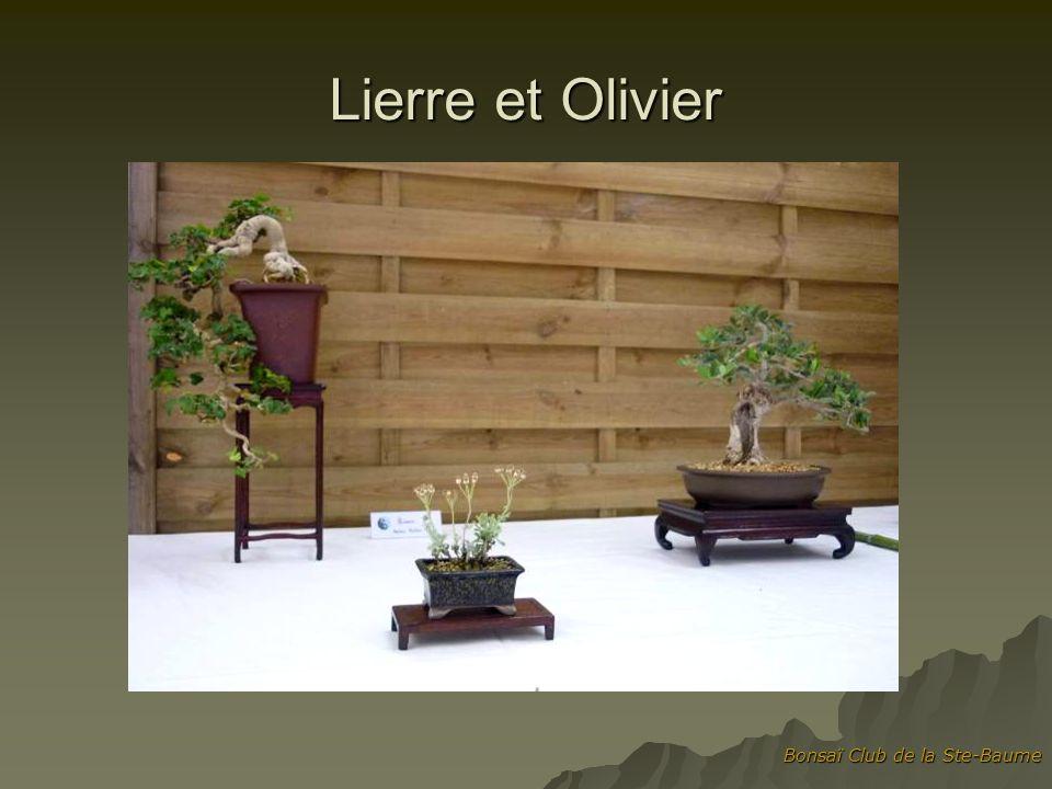 Lierre et Olivier Bonsaï Club de la Ste-Baume