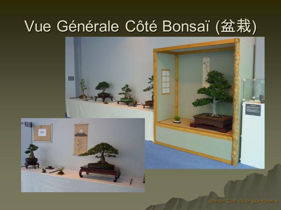 Vue Générale Côté Bonsaï (盆栽)
