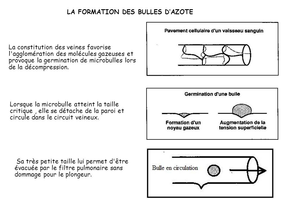 LA FORMATION DES BULLES D'AZOTE